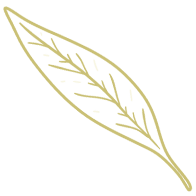 illustrazione savitar tartufi